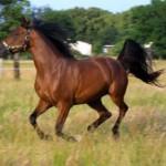 horse-300x243