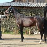 gryazev-2011 (27)