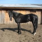 gryazev-2011 (8)
