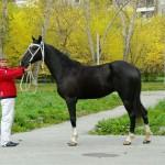 horse-ural (12)
