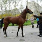 horse-ural (13)