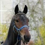 horse-ural (14)