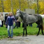 horse-ural (15)