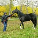 horse-ural (16)