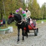 horse-ural (17)