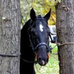 horse-ural (18)