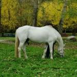 horse-ural (19)