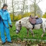 horse-ural (20)