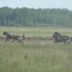 in-artyomovsk-jule-2010 (53)