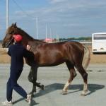 visim-2010 (31)