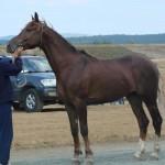 visim-2010 (34)