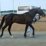 visim-2010 (43)