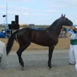 visim-2010 (44)