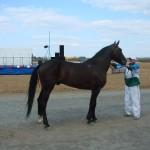 visim-2010 (45)
