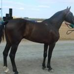 visim-2010 (46)