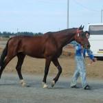 visim-2010 (48)