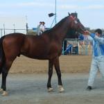 visim-2010 (49)