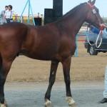 visim-2010 (50)