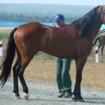 visim-2010 (52)