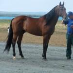 visim-2010 (53)