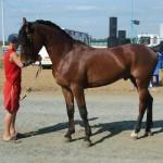 visim-2010 (56)