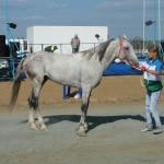 visim-2010 (62)