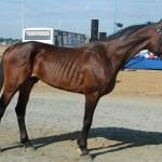 visim-2010 (64)