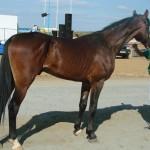 visim-2010 (65)