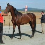 visim-2010 (66)