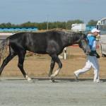 visim-2010 (72)