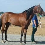 visim-2010 (76)