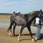 visim-2010 (78)
