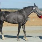 visim-2010 (79)