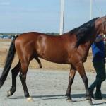 visim-2010 (80)