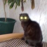 Кот под пальмой