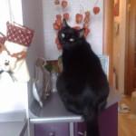 Котик на кухне