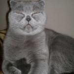 Британская кошка с котенком