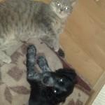 два друга кошка и собака