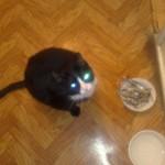 Кот поел вкусной рыбки