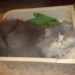 Спит в туалете кот