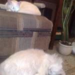 Коты на лежанке