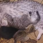 Кошка с котенком - Июнь 2015
