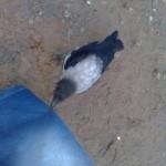 Ворона просит есть