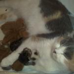 Приняли роды у кошки