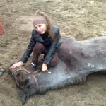 Лошадь под капельницей