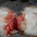 1. Резаная рана