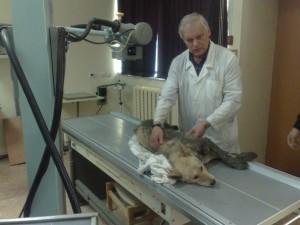 Животное у ветеринарного врача на приеме