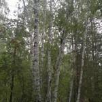 160820121103_thumb