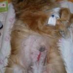 2. После операции
