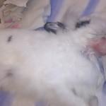 1. Опухоль на горле у кролика